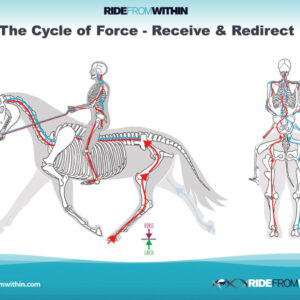 7) Cycle of Force